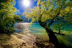 Isole di Brissago (sylviafurrer) Tags: insel island isoledibrissago lagomaggiore baum tree water wasser türkis stimmung abendstimmung