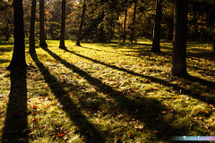 Visual of Nature *A Beautiful Nature* (iLOVEnature's Photography Inspiration) Tags: abeautifulnature visualofnature themortonarboretum lisle illinois chicago us usa forestreserved forest lightandshadow light shadow nature landscape macro tree trees fall autumn park grass wood