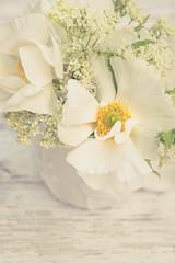 Fresh Whites (photoart33) Tags: soft creams anemone jug stilllife small sweet sweetciceley