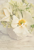 Fresh Whites (photoart33) Tags: soft creams anemone jug stilllife small sweet sweetciceley