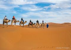 Sahara   TrinDiego (TrinDiego) Tags: trindiego morocco 2018 sahara desert camel sand trek camp berber almamlakahalmaghribiyah westernkingdom المَغرِب ⵍⵎⵖⵔⵉⴱ مرزوقةالصحراء merzouga صحراء northafrica africa المملكةالمغربية kingdomofmorocco ⵜⴰⴳⵍⴷⵉⵜⵏⵍⵎⵖⵔⵉⴱ almaġrib