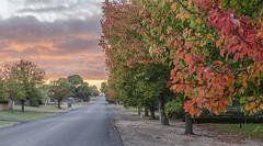 Morning dawning (Bev-lyn) Tags: autumn fall colours vista morning sky outdoors