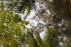 Trees / Деревья (dmilokt) Tags: дерево пальма tree palm nikon d700 dmilokt