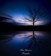 Reflejos (franlaserna) Tags: siluetas silhouette sunrise amanecer tree clouds birds water reflection reflejos