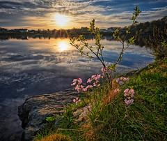 "May ""summer"", Norway (Vest der ute) Tags: xt2 norway rogaland haugesund skeisvatnet water waterscape landscape lake sky clouds sunset flowers grass houses trees reflections rocks fav25 fav200"