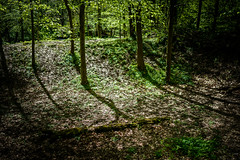 rest (Anthony Stephen Pictures) Tags: mind space forest light trees shadows wales sony a7rii arw zeiss distagon f14 hoya pro1