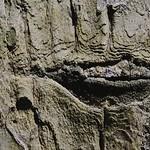whispering bark thumbnail