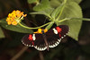 Restful (Jacko 999) Tags: canon eos 5ds r ef100mm f28l macro is usm robert eede beauty beautiful pink warm pretty butterfly butterflie butterflies