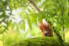 high up (judith.kuhn) Tags: natur nature tier outdoor wildlife eichhörnchen squirrel sciurusvulgaris baum tree moos moss blätter leaves laub ast zweig branch nut walnuss futter food nuss walnut