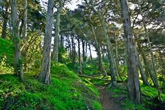 LE Trees 3 (TheseusPhoto) Tags: nature naturephotography beautyinnature vista colors scenic trees forest lush