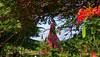"Wringin Lawang (""Bodhi-Baum-Tor"") eines Trowulan-Tempels in Ostjava aus dem 14. Jahrhundert. 17383/9933 (roba66) Tags: wringinlawang urlaub reisen travel explore voyages visit tourism roba66 asien asia inselstaat java tempelanlage tempel temple tempelanlage"" bauwerk architektur architecture arquitetura statue kulturdenkmal monument fassade building bau façade platz places historie history historic historical geschichte historyhistoric skulptursculpture relief urban ostjava"