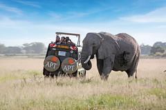 AFR_4WD_Geoffs_IMages_100_(EDIT)_GU.jpg (Traveloscopy) Tags: pr travel tours africa apt