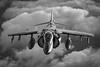 AV-8B_VMA-223_DSC2948_SCY (syoumans07) Tags: vma223 bulldogs av8b harrier cherry point