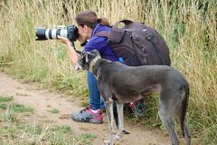 170713 B&I-0096 (whitbywoof) Tags: misty rescue pet dog lurcher katrina photographer canon
