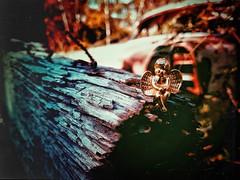 ○●Ángeles caídos, almas muertas en cuerpos vivos.●○ (ivethmendez86) Tags: angel macro figura toys madera textures texturas garden jardin cute figure photograpy mexico bonito samsung s7edge alas wings