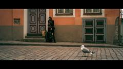 Tallinn, Estonia (emrecift) Tags: candid portrait street photography animals cityscape old city tallinn estonia grain cinematic 2391 anamorphic leica m8 voigtlander 35mm f14 emrecift