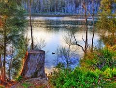 Tranquility by the lake II (elphweb) Tags: hdr highdynamicrange nsw australia tree trees forest bush woods wood lake lakeside