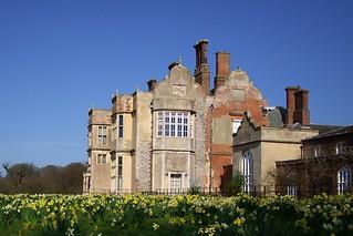 Daffodils at Felbrigg Hall-National Trust