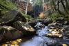 Trentham Falls (Scon_RAD) Tags: autumnal autumn colour color leaves water wate waterfall melbourne australia victoria nikon d750 trentham