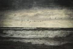 Stormy Flight (delmarvajim) Tags: digitalart digitalprocessing digitaleffects texture drama weather waves birds clouds lake flight surf