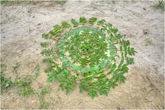 Mandala - LandArt (Hanspeter Ryser) Tags: landart mandala art kunst blätter pflanzen grün