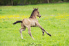 Ice Coffee (PhotOw'graphie) Tags: cheval horse vert poulain baby extérieur animal