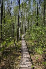 IMGP14119 (Łukasz Z.) Tags: poleskiparknarodowy nationalpark sigma1750mmf28exdchsm pentaxk3 starezaucze lubelskie rzeczpospolitapolska