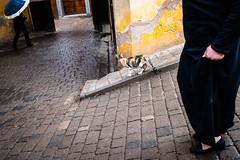 (Jpierrel) Tags: 23mm fes fez fuji fujifilm ixt maroc morocco xt20 xf23mmf2 fujifilmxt20 chat cat jaune yellow street rue medina
