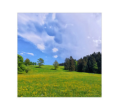 Wenn der Himmel mit den Bäumen spricht . . . (photoarchiv65) Tags: spring frühling trees bäume meadow wiese flowers blumen heaven sky himmel clouds wolken