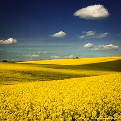 Yellow and Blue (Richard Walker Photography) Tags: clouds fields landscape nature oilseedrape spring hill
