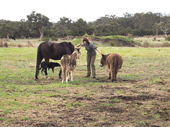 Sue & Animals I – Red Moon Sanctuary, Redmond, Western Australia (Red Moon Sanctuary) Tags: redmond westernaustralia australia au farm donkeys animals 6327 greatsouthern wa redmoonsanctuary