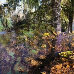 (Arthur Marshall) Tags: iphone8plus canada novascotia kejimkujik multipleexposure