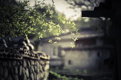 Warmth (yarn.spinner) Tags: spring may plant tree wall stone afternoon light twigs leaf green warmth house pot tile tradition