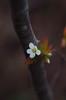 may15 2018 4 (Delena Jane) Tags: delenajane dfo whiteflower macro newfoundland ngc canada closeup 100mm pentaxart