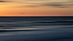 Twilight (Christina's World-) Tags: outdoors ocean orange sea sandiego scenic seascape seagull seaside seashore sunset gold goldenhour bird flying flight waterscenic water waves icm clouds sky light landscape dark twilight california usa coth5