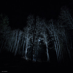full moon forest (sami kuosmanen) Tags: taivas tree tumma trees travel tuulos tähti metsä maisema yö yksin nature north night europe exposure expression emotion eerie scary horror finland forest flash suomi sky valo valotus photography puu pitkä luonto light landscape long