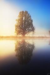 Reflection on a Misty River (johaennesy) Tags: river ruhrgebiet ruhr ruhrwiesen mist misty fog morning soft warm tree schwerte opensourcesoftware gimp rawtherapee pentaxian pentax sonnenaufgang sunrise lonetree reflection