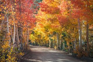 Bishop Creek Autumn Colors Fall Foliage Fine Art Photography! High Sierras California Fall Colors! High Res Elliot McGucken Eastern Sierras Landscape Nature Photography! Fall Foliage Sony A7RII Sony ILCE-7RM2 & FE 24-240mm F3.5-6.3 OSS!