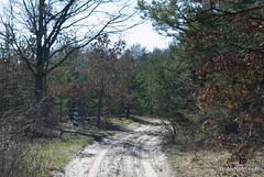 Волинський ліс Лісова дорога InterNetri Ukraine 0916582621