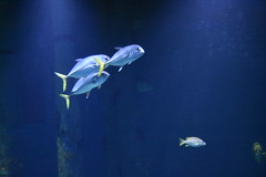 Wonders of Wildlfie National Museum and Aquarium (Adventurer Dustin Holmes) Tags: 2018 wondersofwildlife fish aquarium tropical saltwater animalia animals chordata