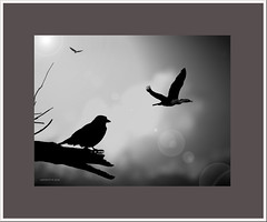 A bird watching........:D (agphoto100) Tags: birds flight eagle cormorant branch bough sky clouds light dark pentax k200d frame bird tree beak feathers fly photoshop feather
