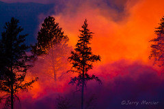 _MG_7582 -  Forest fire.  ©Jerry Mercier (j. mercier) Tags: nature northernwisconsin wisconsin tree trees jerrymercier mercier beauty beautiful flame flames fire fires wildfire controlledburn burn burning forest woods chequa egonnicolet chequamegonnicoletnationalforest nationalforest national smoke smokey colorful trunks branches dlame color evergreen outdoor outside fireflameflamesburncontrollednorthernwisconsin bayfieldcounty evening night controlled prescribed prescribedburn