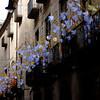 Temps de flors 2.018 (1) / Girona / Gironés / Catalunya (Cataluña-Catalonia) (Ull màgic (+1.500.000 views)) Tags: girona gironés catalunya cataluña catalonia nucliantic carrer calle balcons edifici arquitectura fuji xt1