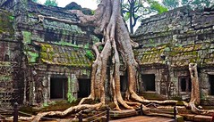 Ta Prohm Temple in Siem Reap (siemreapcityguide) Tags: taprohm angkorwat cambodia siemreap siemreapcityguide southasia city traveling traveler tourist holiday trip tourism visiting temple tour traveltheworld asia khmer buddhist center visit