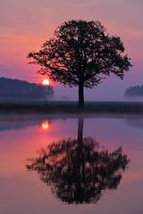 IMG_8599 (geraldtourniaire) Tags: baum canon natur nature 24105l sonnenaufgang franken 6d eos6d