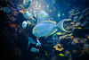 Fish (briantolin) Tags: fish aquarium water tank colorfulfish