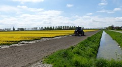 Foto Roel van Deursen Bollenpracht Goeree Overflakkee - Oude Tonge 2018-04-23 (4) (Roel van Deursen) Tags: tulpen vol bloei op goereeoverflakkee 2018
