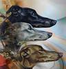 Three dogs (jaci XIII) Tags: cão cachorro animal vintagem dog puppy