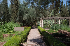 C91A8279.jpg (Inertia21) Tags: geography landscape cookingsschool morocco marrakech travel