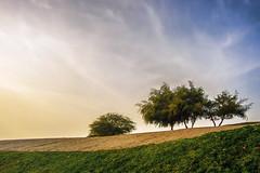 Spring in the desert (rudie_y) Tags: doha qatar